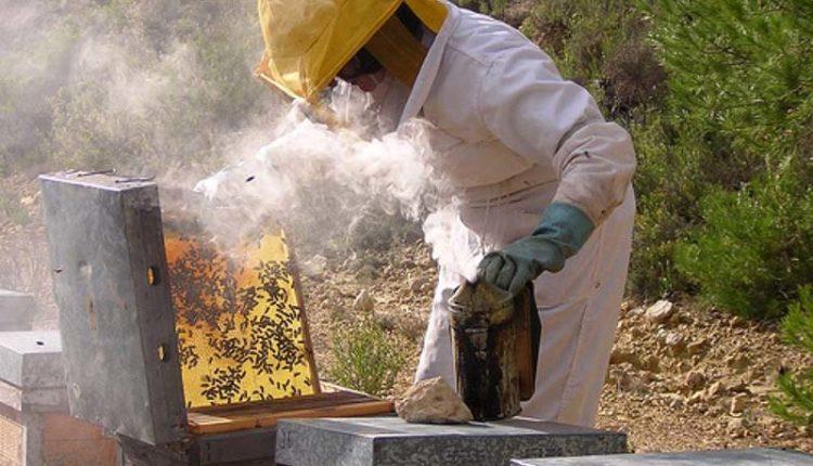 apicultura-albine