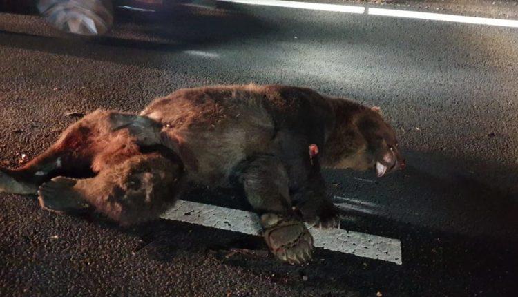 accident urs mort