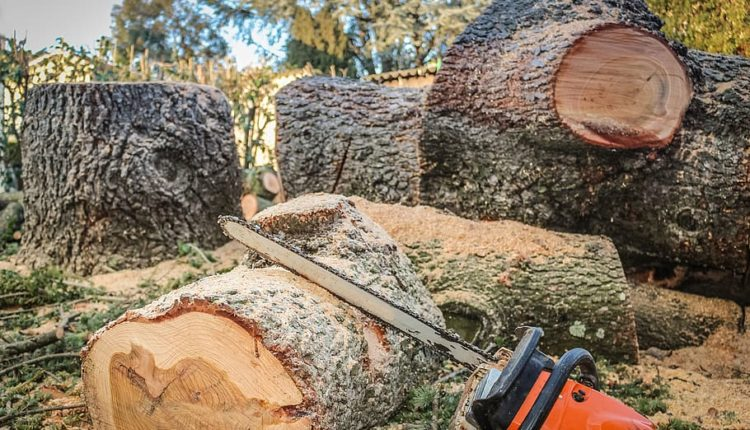lant-drujba-lemn